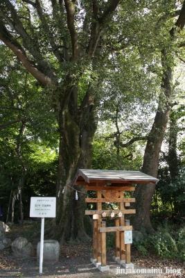 岩座神社(大津市西の庄)16