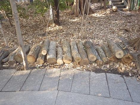 クヌギのホダ木2180130