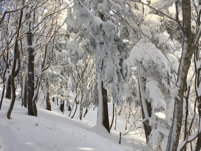 2018武奈ヶ岳/着雪