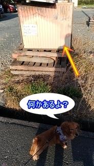 謎のボックス