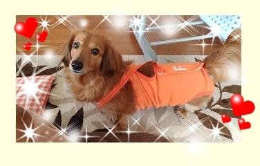 犬太郎6歳