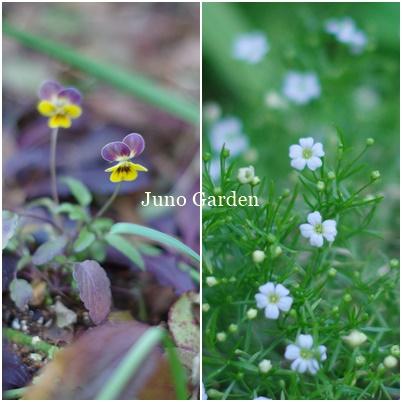 庭花180105