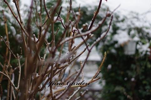雪180115