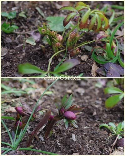 庭植え1980225
