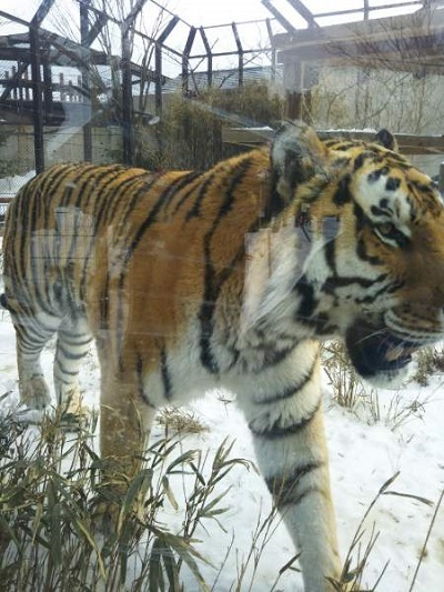 雪の動物園2