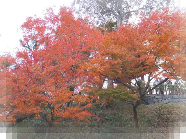 京都の旅8