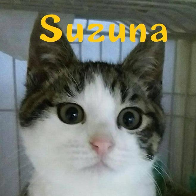 Suzuna.jpg