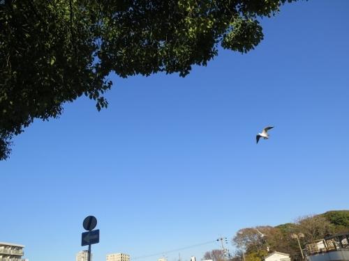 愛知県名古屋市 堀川沿い カモメ