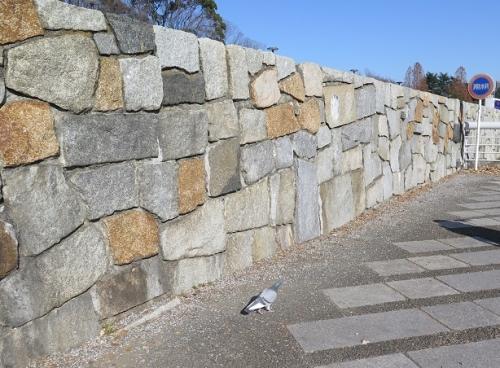駒沢オリンピック公園 ドバト