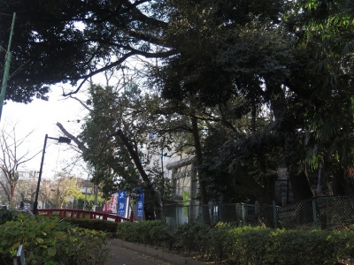 東京 蛇崩川緑道