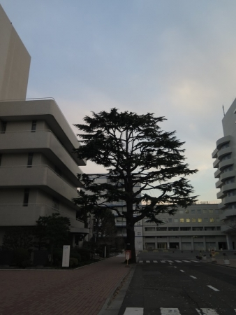 昭和女子大学