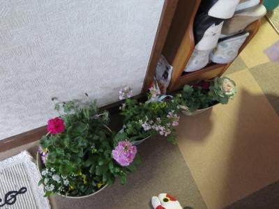 買ってったお花