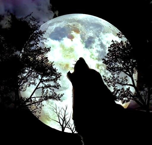 BELLA月と狼