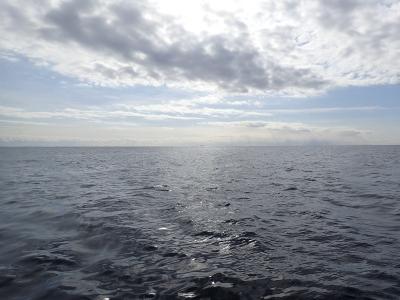 2018-02-08 今日の海 千葉でダイビング@かめはうす