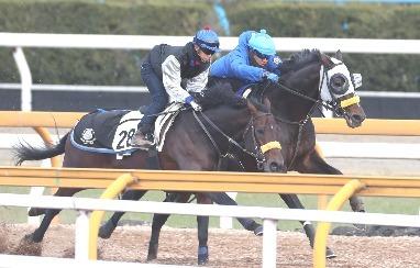 【有馬記念】キタサンブラック1週前追い切り無名の併走馬の馬なりに一杯で遅れる