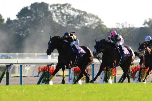 【競馬】日本で全く勝てなくなったディープ牡馬、続々と低レベル豪州へ逃亡www