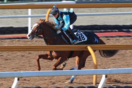 【競馬】今週の必ず馬券になる馬を教えてください