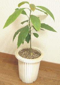 Foliage_Plant-1.jpg