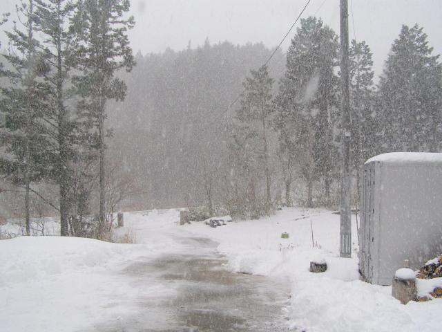 また降雪0127