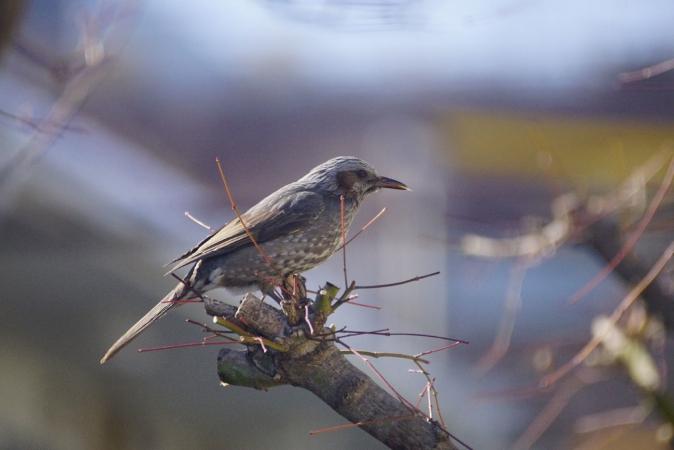 DSC09118鳥