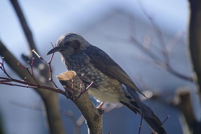 DSC09254鳥