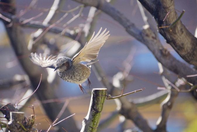 DSC09259鳥