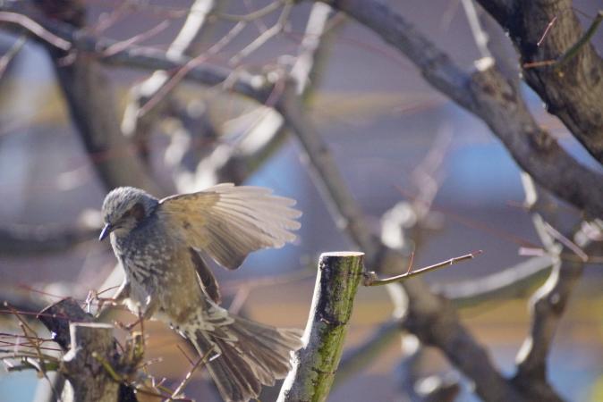 DSC09260鳥