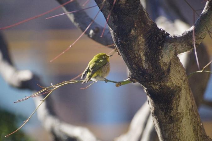 DSC09586鳥