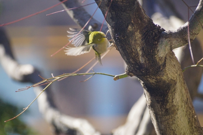 DSC09593鳥
