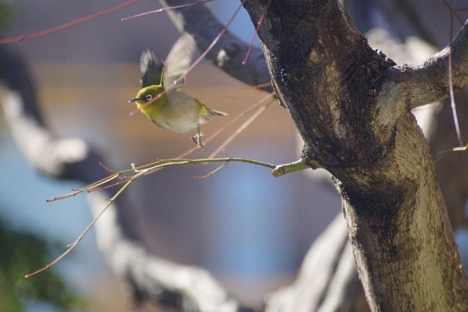DSC09667鳥