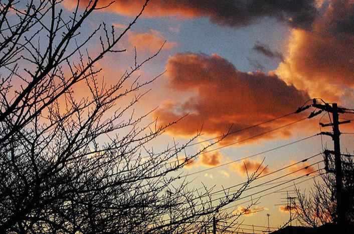 枯れ木と雲