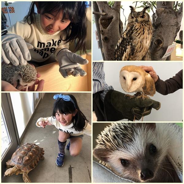 pageふえあい動物園22