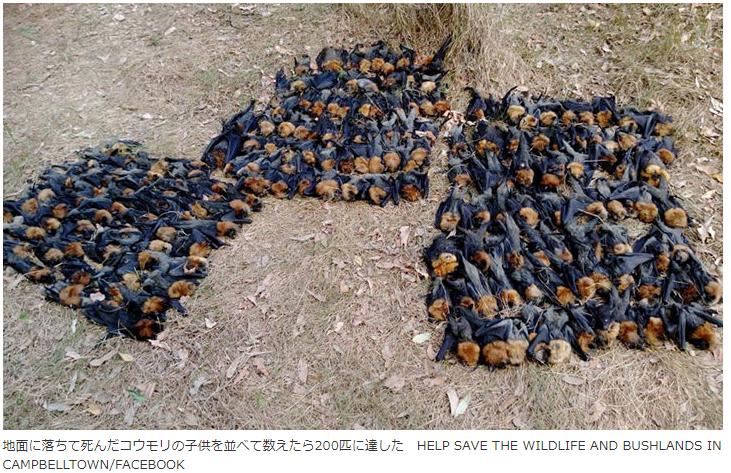 蝙蝠大量死