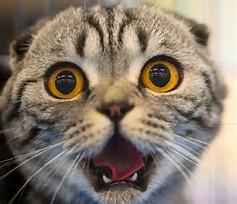 ビックリ猫2