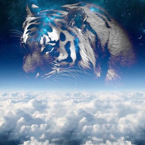 tiger-2672166_6401.jpg