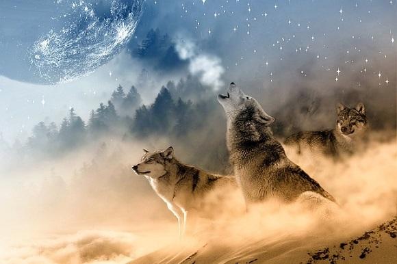 wolves-1400819_6401.jpg