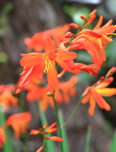 ショウガ科の花