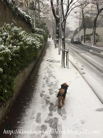 180125 Snow3