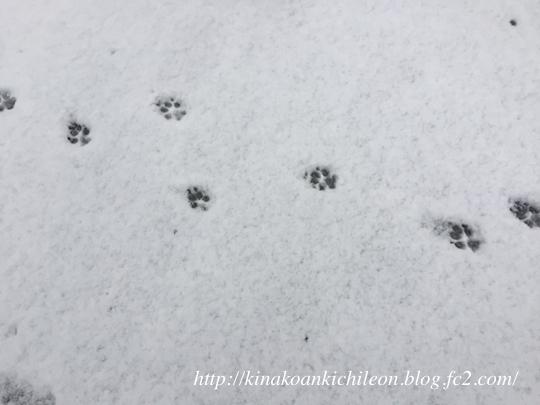 180125 Snow5