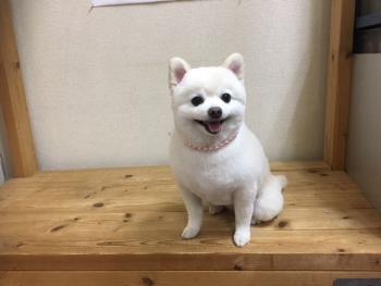 30.2.15 マロンちゃん