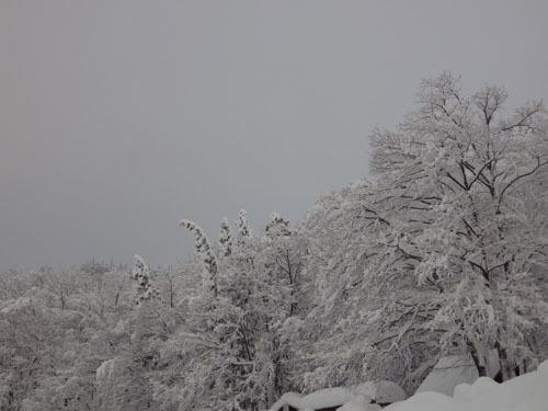 180112 森の木々3