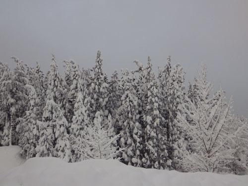 180112 森の木々2