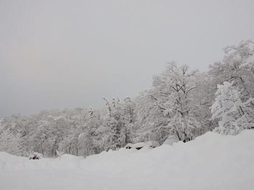 180112 森の木々