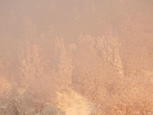 180113 杉のモンスター3