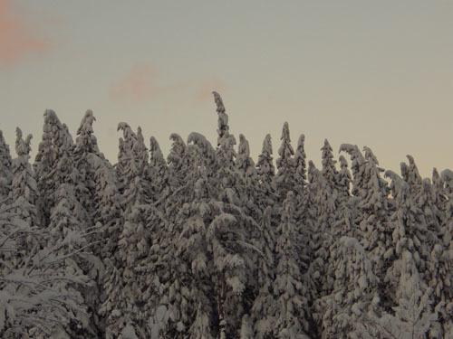 180113 杉のモンスター1