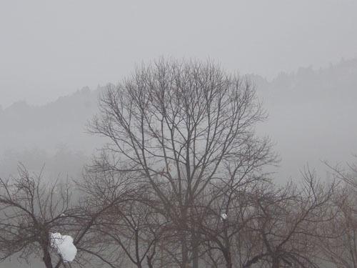 180117 霧の朝3