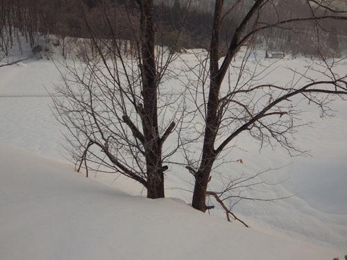 180224 クリ雪害