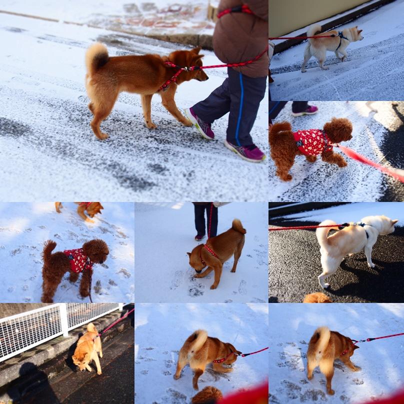 玄武初めての大雪2