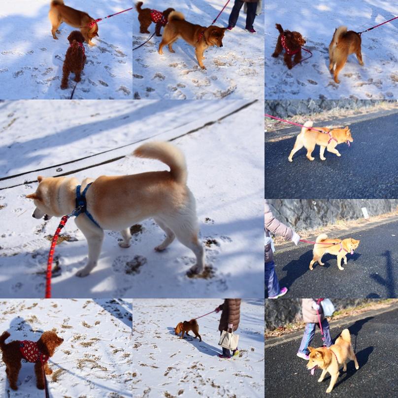 玄武初めての大雪3