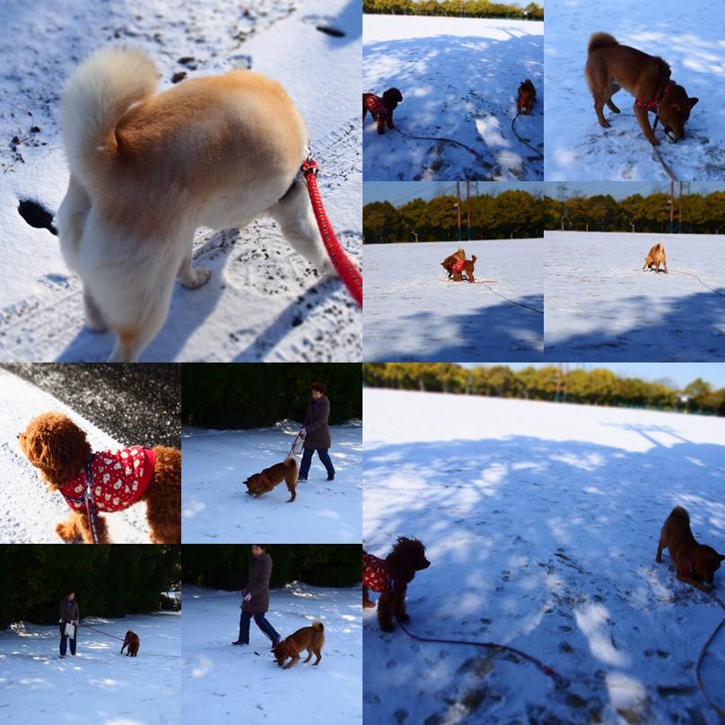 玄武初めての大雪5